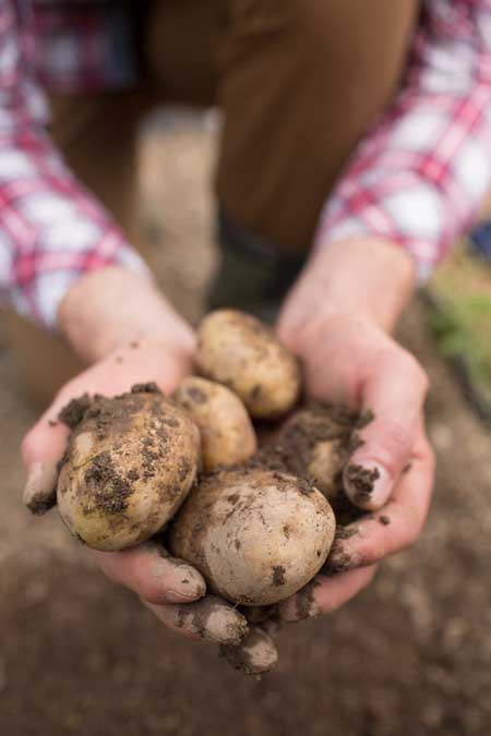 Potatoes From the Garden | Foodla.com