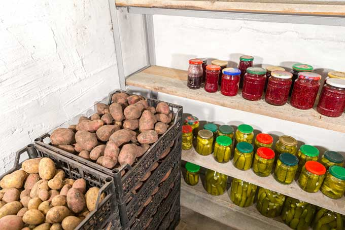 Potatoes in a root cellar | Foodal.com & How To Store Potatoes For The Long Haul | Foodal