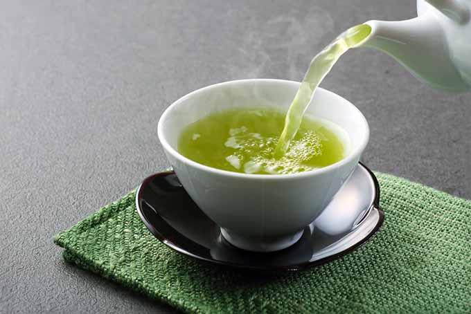 Cup of Green Tea | Foodal.com