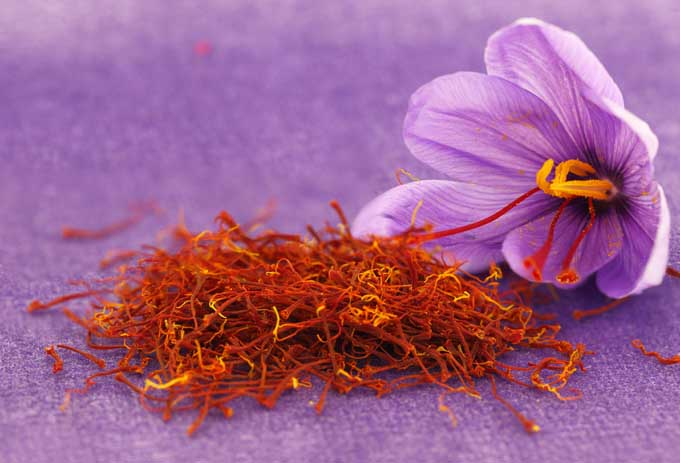 Saffron spice with crocus | Foodal.co