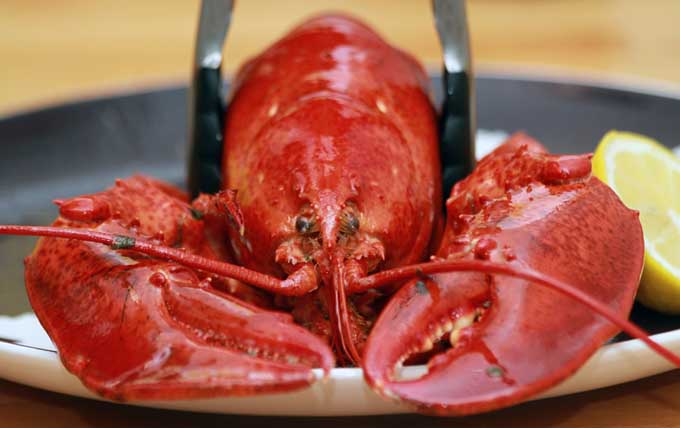 The Best Pots For Crab Clam Crawfish And Lobster Reviewed Foodal