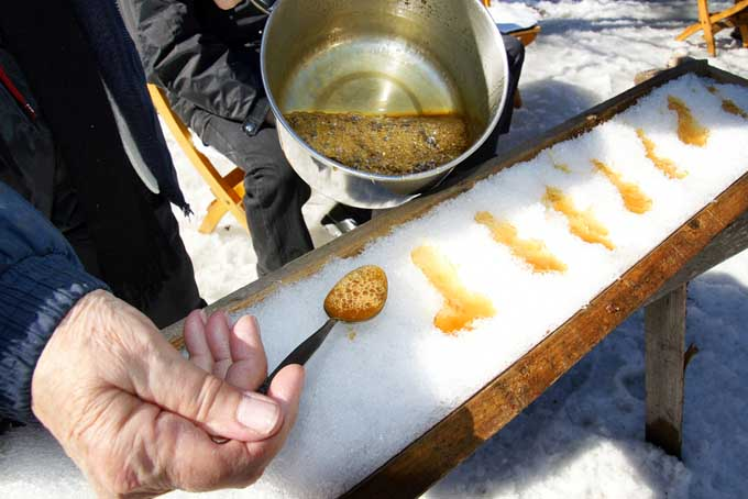 The Tastes Of Quebec - Making Frozen Maple Syrup Taffy | Foodal.com