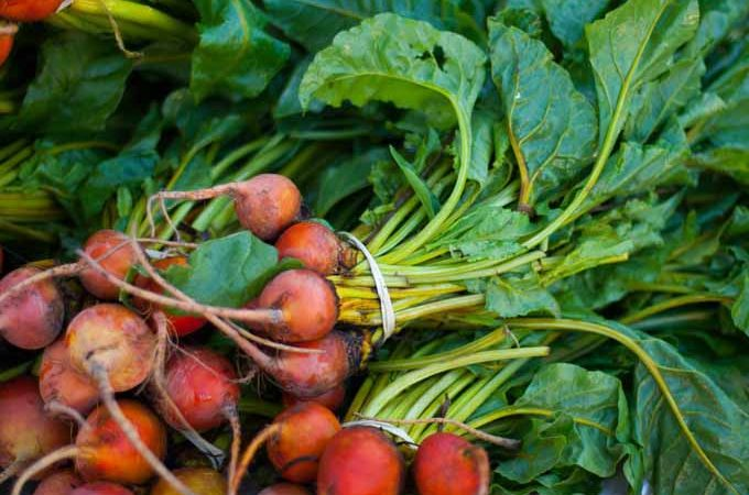 Close up of bunches of beets with leafy greens. Close up.