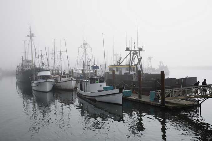 Fishing boats in Newport, Oregon | Foodal.com
