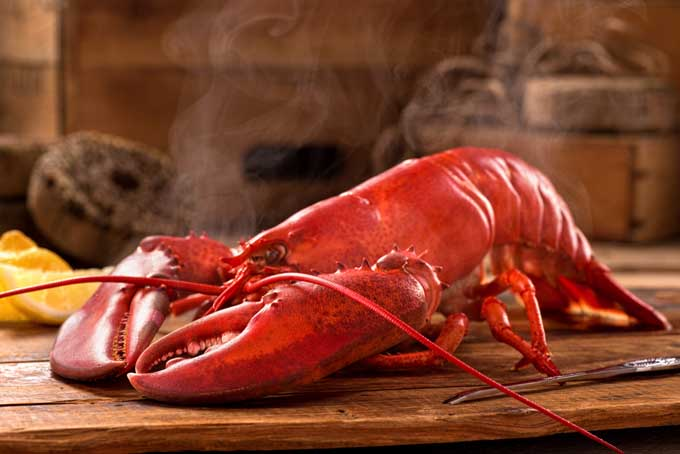 How to Buy and Cook a Lobster | Foodal.com