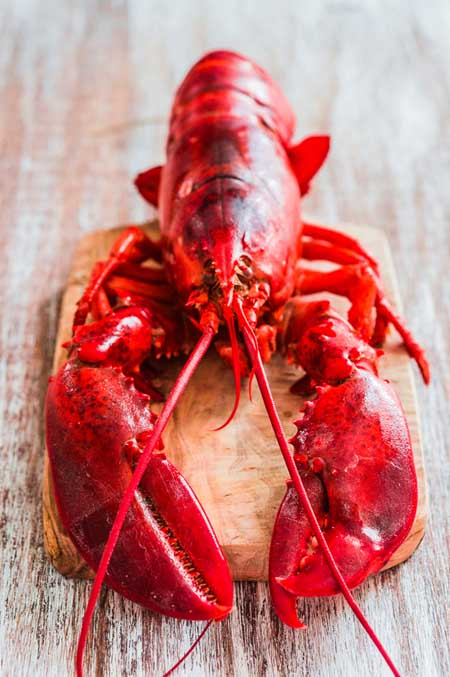 How to Prepare Lobster | Foodal.com
