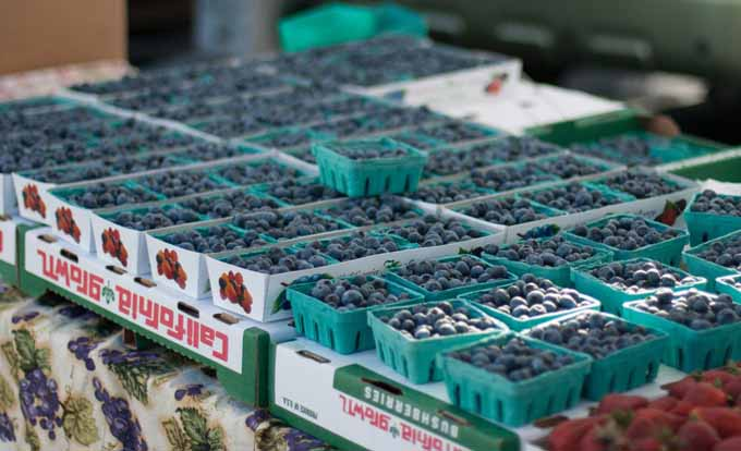 Boxes of locally grown berries at a California Farmers Market.