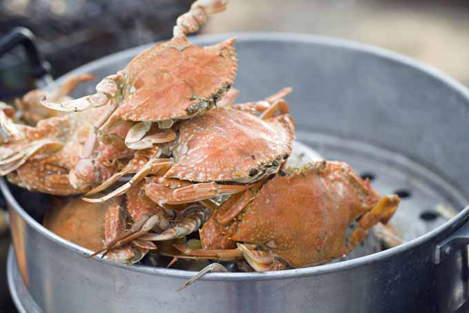 Crabs in a steaming pot | Foodal.com