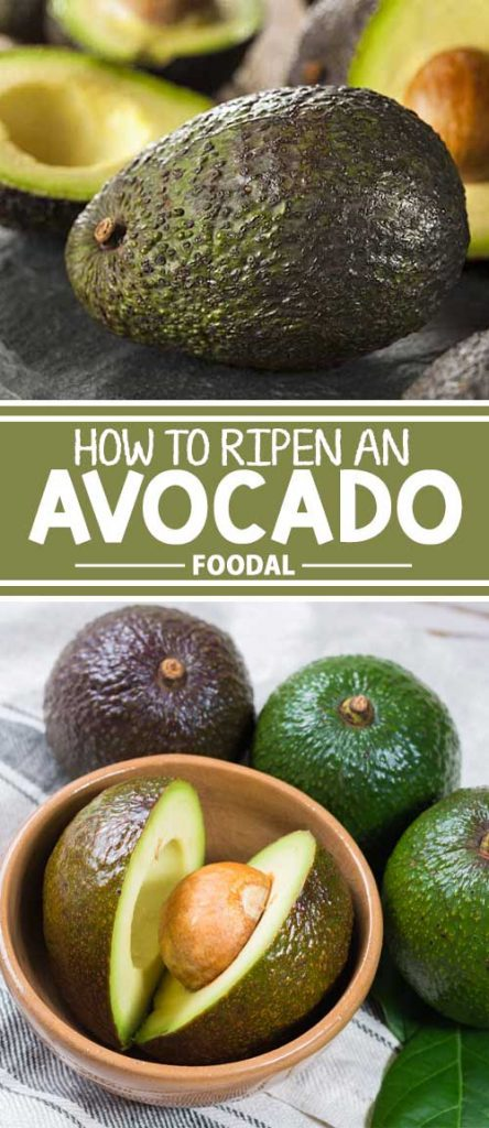 Are your avocados as hard as a rock? Afraid you'll chip a tooth? Don't fret. Read our tips on softening them up, and you'll be making guacamole in no time!