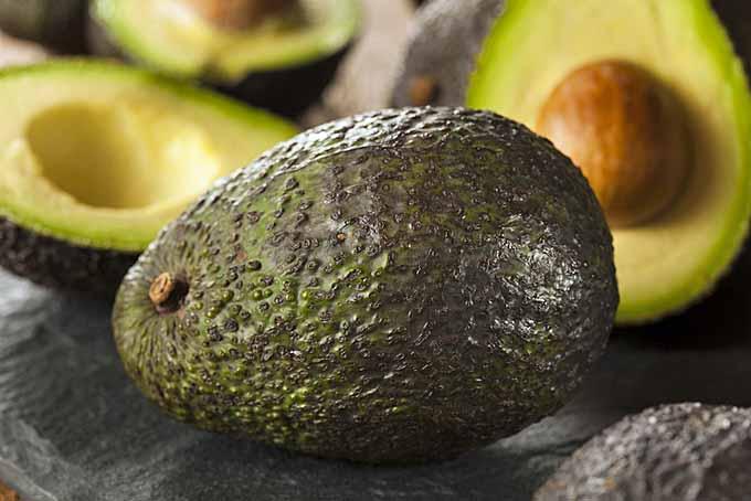 How To Ripen Avocados Foodal