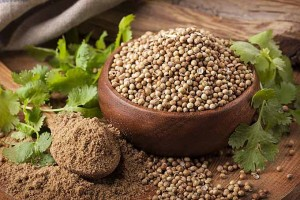 Get Cooking With Coriander