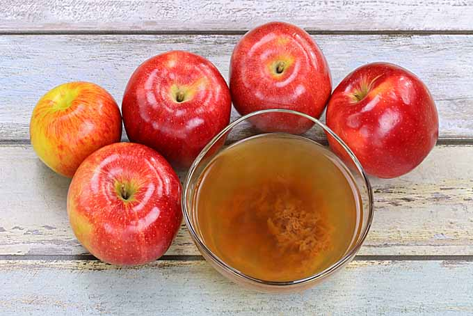 Mother of Vinegar - Apple Cider | Foodal.com