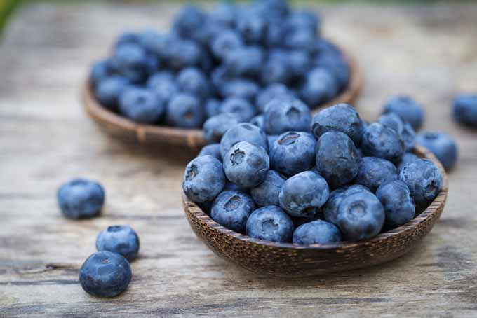 Blueberries - great for well-being | Foodal.com