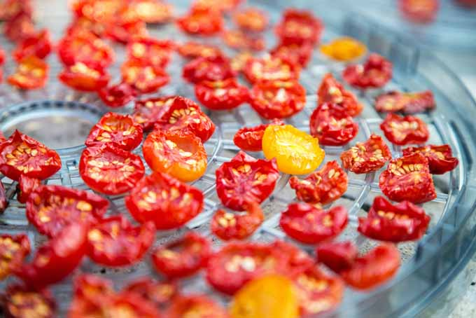 How To Make Sundried Tomatoes with a Food Dehydrator | Foodal.com