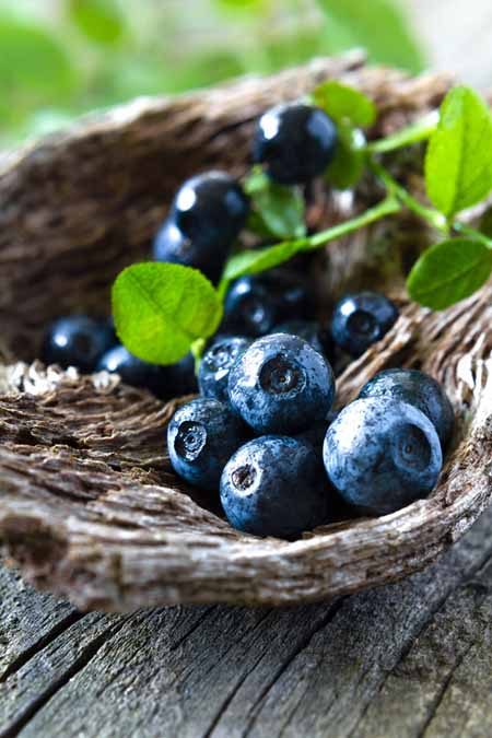 Natural Blueberries - Great for Your Health | Foodal.com