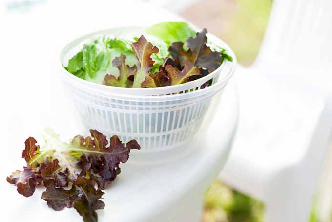 Salad Spinners - 10 of the Best on the Market   Foodal.com