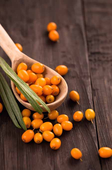 Sea Buckthorn: The Superfood You've Probably Never Heard Of   Foodal.com