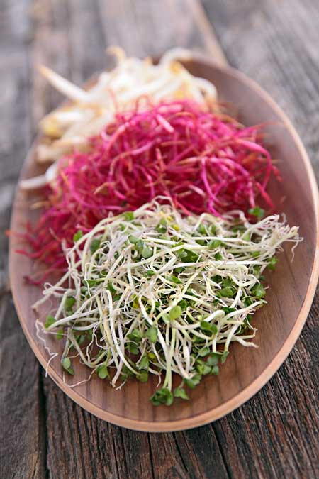 Sprouting 101 - Incoporate them into you spiralized salads! | Foodal.com