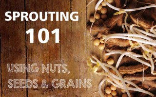 Sprouting 101: Using Nuts, Seeds & Grains | Foodal.com