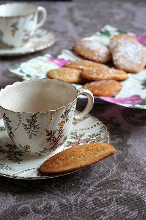 Food has a power to take us back to a different time and place... like Proust's madeleines. Learn to make your own madeleine cookies at home with our simple recipe: https://foodal.com/recipes/desserts/madeleines-the-aristocrat-of-cookies/