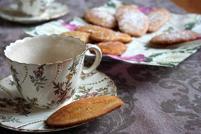 Madeleines might seem fancy, but did you know they're easy to make at home? Get the recipe: https://foodal.com/recipes/desserts/madeleines-the-aristocrat-of-cookies/