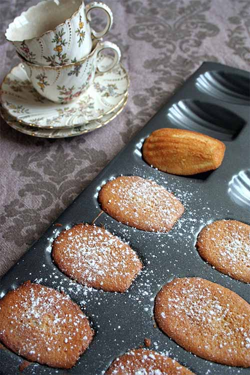 Ever wished you could make your own madeleines at home? It's easier than you think! We share the recipe: https://foodal.com/recipes/desserts/madeleines-the-aristocrat-of-cookies/