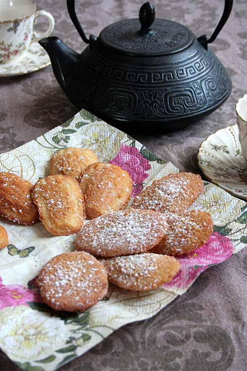 Madeleines are a tasty French bakery treat, but did you know these cookies can be made simply at home? Prepare them for your next teatime gathering with our recipe: https://foodal.com/recipes/desserts/madeleines-the-aristocrat-of-cookies/