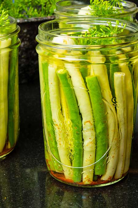 Dilly Green Bean Pickle Recipe | Foodal.com