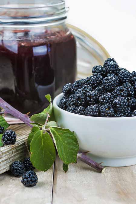 Recipe for Homemade Blackberry Jelly | Foodal.com