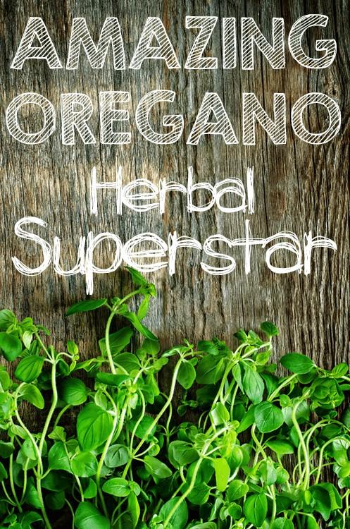 Amazing Oregano: Herbal Superstar | Foodal.com