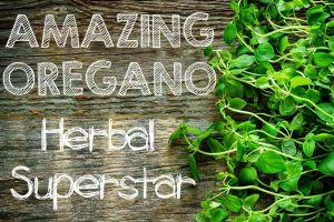 Amazing Oregano: Herbal Superstar