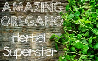 Amazing Oregano - Herbal Superstar | Foodal. com