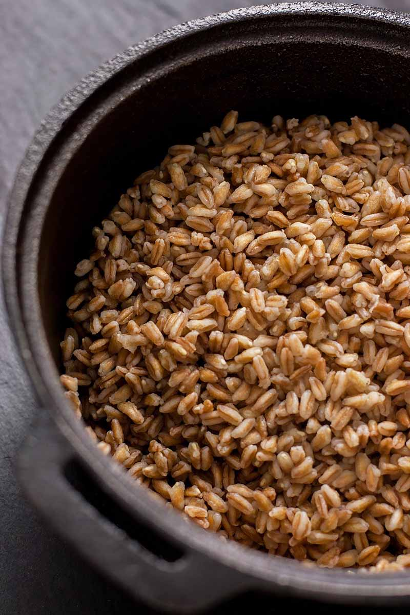 Vertical image of a pot of farro.