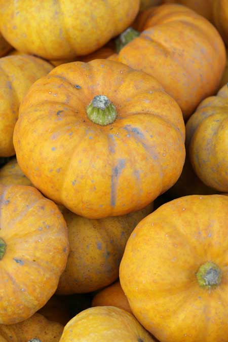 Goldust Winter Squash | Foodal.com