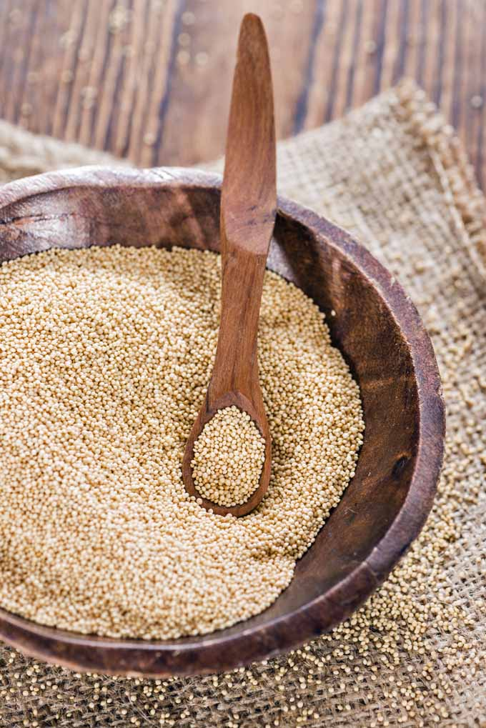 Are you looking for a gluten-free and nutritious addition to your menu? Read Foodal's guide to amaranth and include this healthy cereal in your diet now.: https://foodal.com/knowledge/paleo/amaranth-a-splendid-gluten-free-alternative-to-wheat/