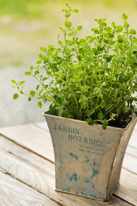 The many uses of oregano | Foodal.com