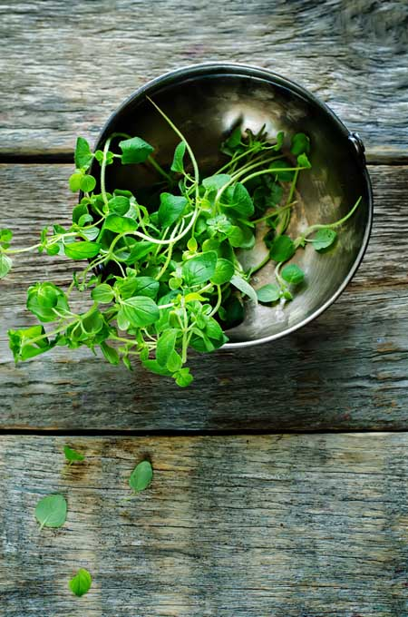 Oregano - Traditional Uses | Foodal.com