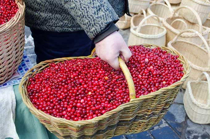 A basket of cranberries | Foodal.com