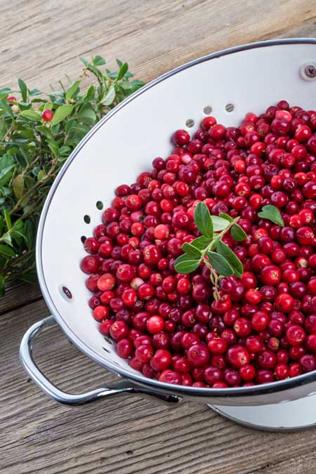 Caring for cranberries | Foodal.com