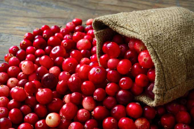 Fresh Cranberries | Foodal.com