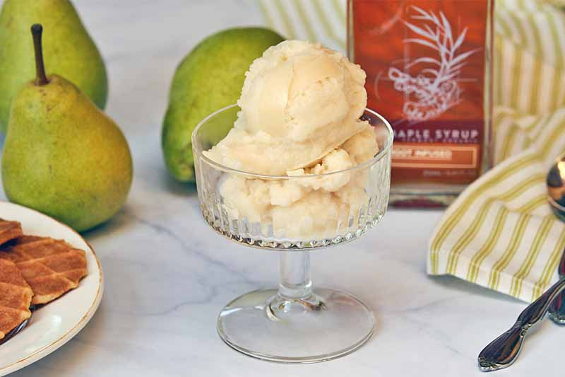 Several scoops of homemade sorbet fill a glass dessert dish, with a plate of cookies and three whole pears to the left, a glass bottle of maple syrup, green and white striped kitchen towel, and a spoon to the right, on a gray and white marble background.