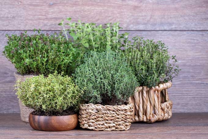 Fresh Herbs in a Basket | Foodal.com
