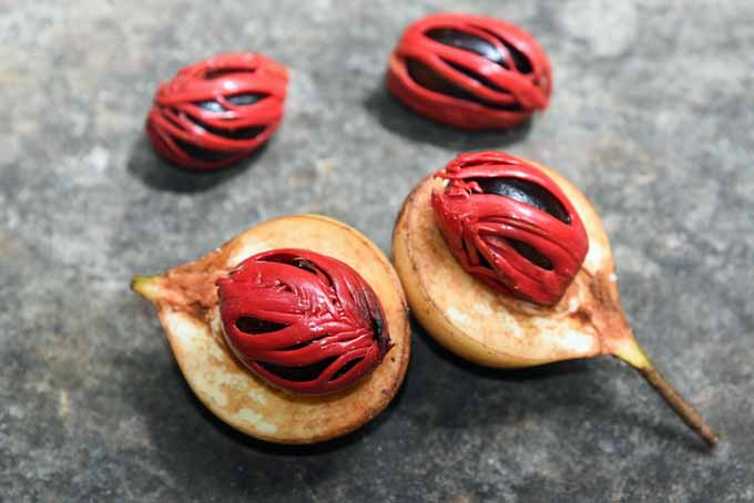 Nutmeg fruit - mace highlighted | Foodal.com