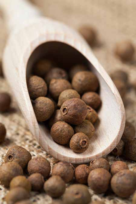 Spoonful of allspice berries | Foodal.com