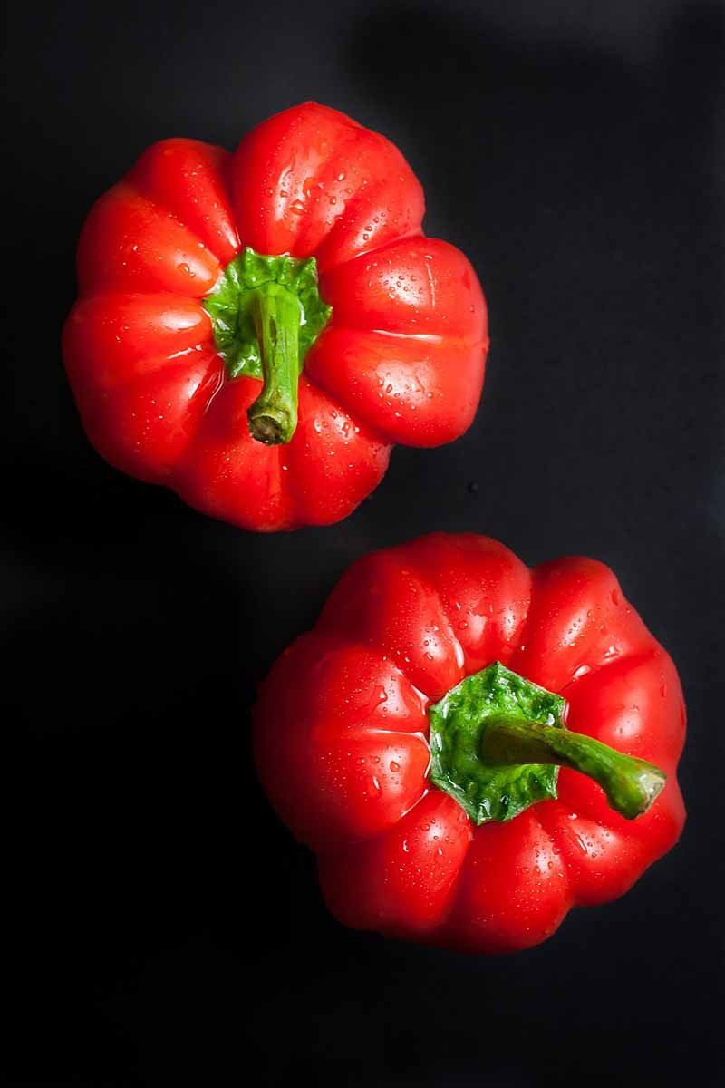 Vertical image of two red bell peppers on a black surface.