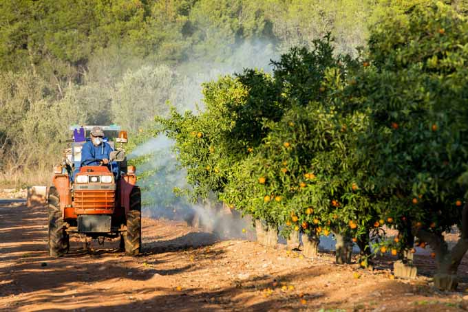 Chemical spraying of citrus | Foodal.com