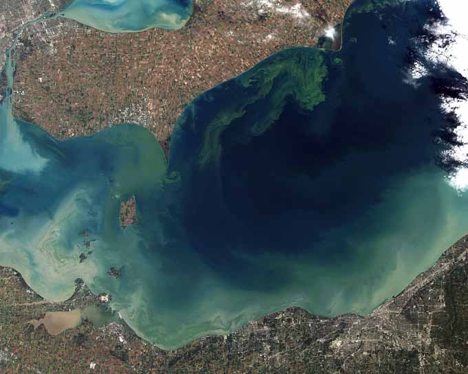 Toxic Algae Bloom in Lake Erie | Foodal.com