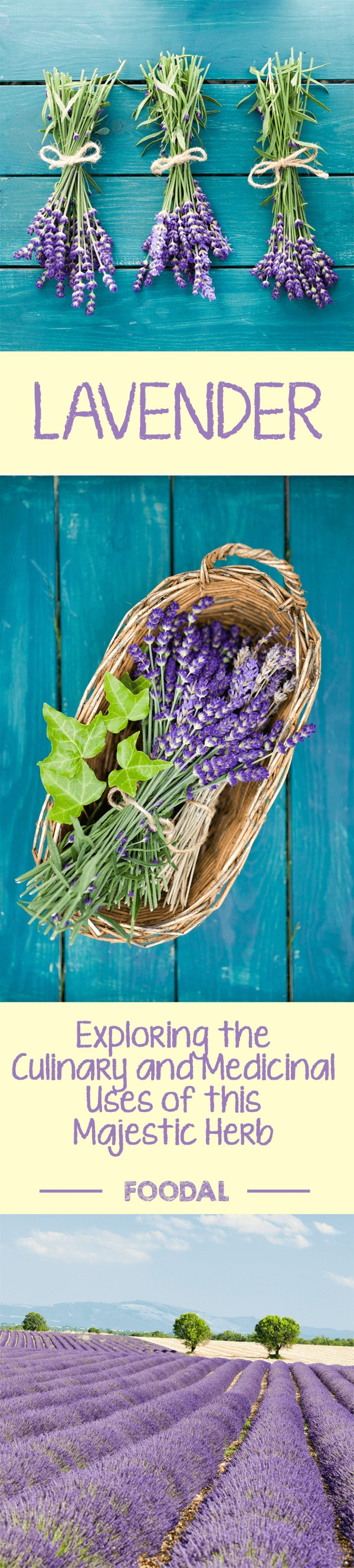 Did you know you can use lavender in your cooking? The wonderful scent and flavor of this Mediterranean flower will provide both sweet and savory recipes with a new twist. To find out how to add this fragrant flower to your own culinary creations, read more now on Foodal. https://foodal.com/knowledge/herbs-spices/lavender-a-beautiful-and-versatile-herb/