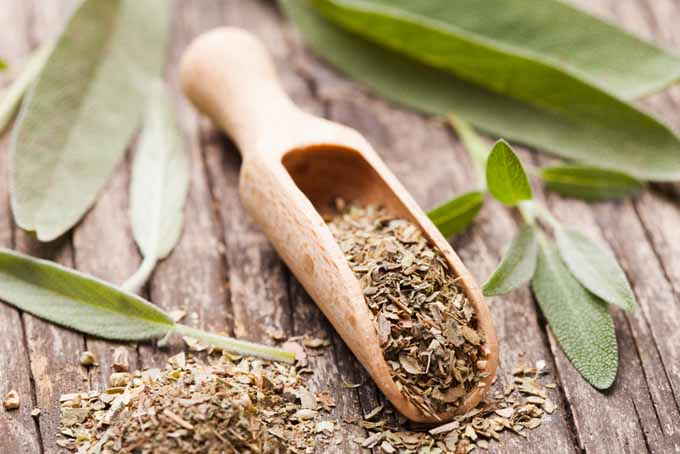 Sage is used to protect againts inflamation, protect againts bloat, improve symptoms of depression, and can treat gum disease | Foodal.com