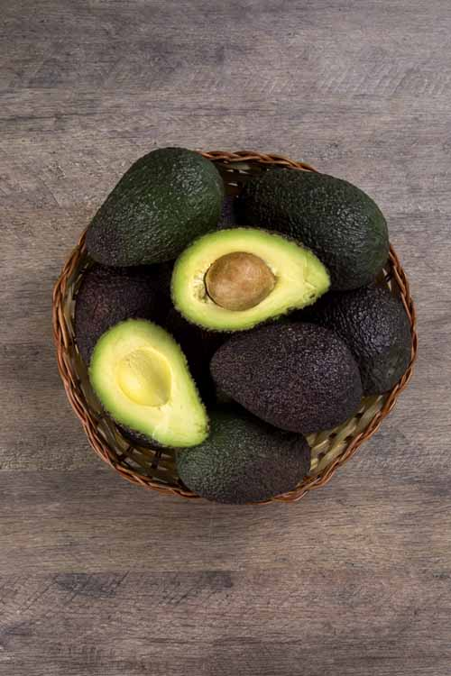 The Right Way to Choose and Store Your Avocados | Foodal.com